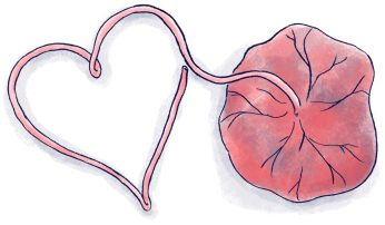 placenta-and-umbilical-cord-illustration-from-the-Mama-Natural-Week-by-Week-Guide-to-Pregnancy-Childbirth-1024x599